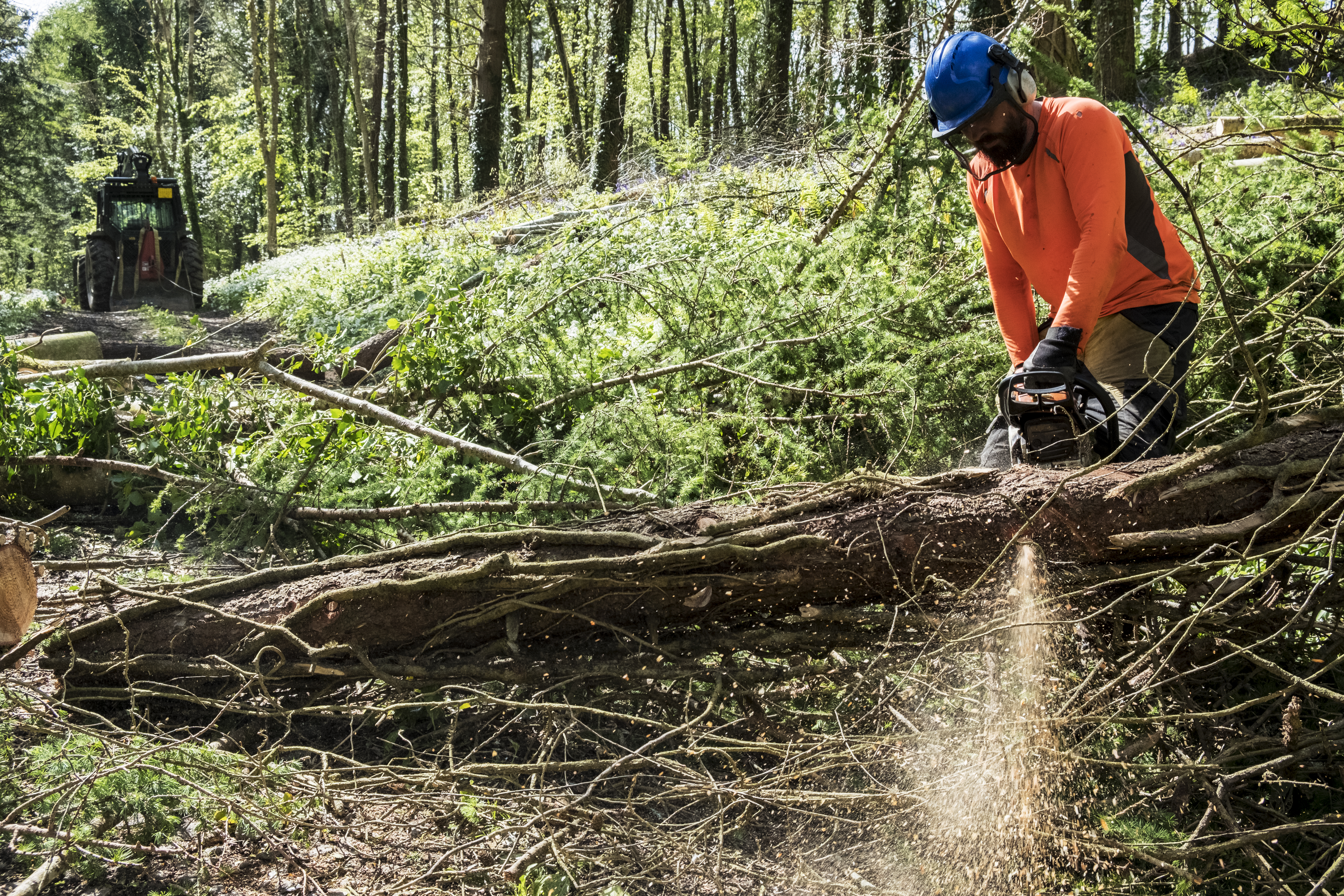 Man Using Chainsaw to clear fallen trees